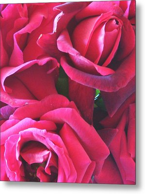 Roses Like Velvet Metal Print by Dana Patterson