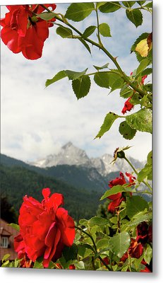 Metal Print featuring the photograph Roses Of The Zugspitze by KG Thienemann