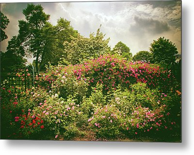 Roses Reign Metal Print by Jessica Jenney