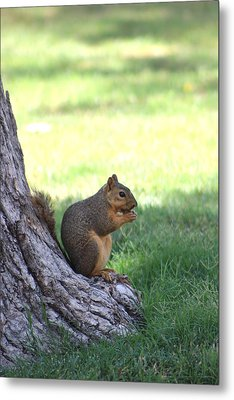 Roswell Squirrel Metal Print by Colleen Cornelius