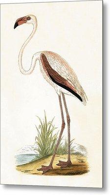 Rosy Flamingo Metal Print by English School