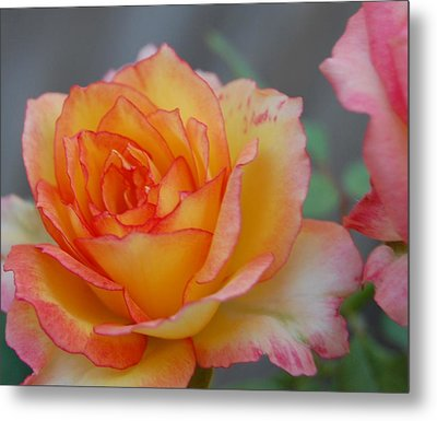 Rosy Outlook Metal Print by Jean Booth