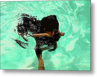 Rottweiler Dog Swimming Metal Print by Sally Weigand