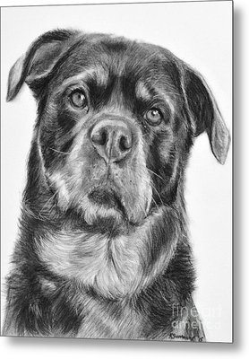Rottweiler Drawing Titled Mama Metal Print by Kate Sumners