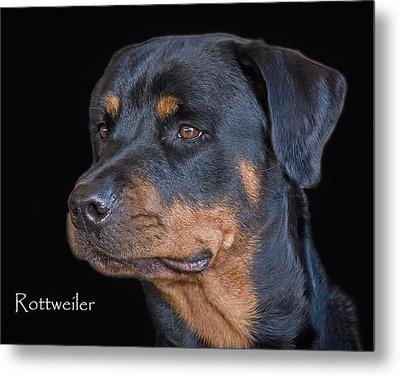 Rottweiler Metal Print by Larry Linton