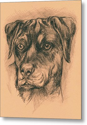 Rottweiler Mix In Charcoal Metal Print by MM Anderson