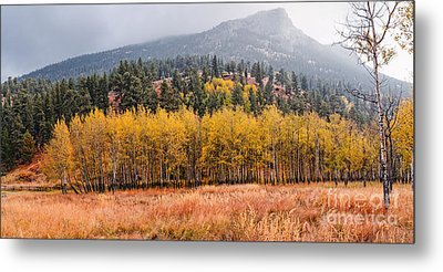 Row Of Aspens In The Fall River Valley - Fall Foliage In Estes Park Colorado Metal Print by Silvio Ligutti