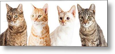 Row Of Cats Closeup Metal Print