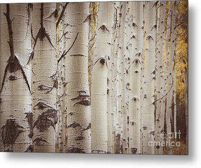 Metal Print featuring the photograph Rows by The Forests Edge Photography - Diane Sandoval