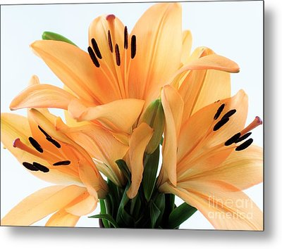 Metal Print featuring the photograph Royal Lilies Full Open - Close-up by Ray Shrewsberry