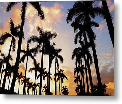 Royal Palm Way Metal Print by Josy Cue