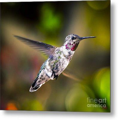 Ruby Throat Hummingbird Metal Print