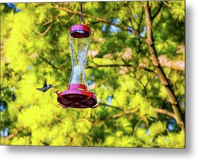 Ruby-throated Hummingbird 3 Metal Print