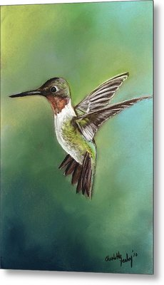 Ruby Throated Hummingbird Metal Print by Charlotte Yealey