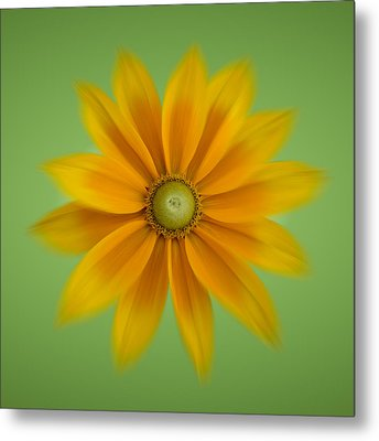 Metal Print featuring the photograph Rudbeckia Blossom Irish Eyes - Square by Patti Deters