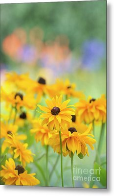 Rudbeckia Indian Summer Flowers Metal Print