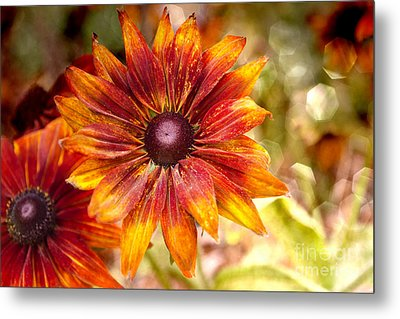 Rudbeckias With Sparkly Bokeh Metal Print by Maria Janicki