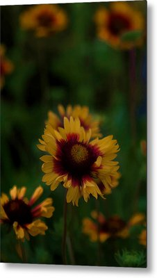 Metal Print featuring the photograph Ruffled Up by Cherie Duran