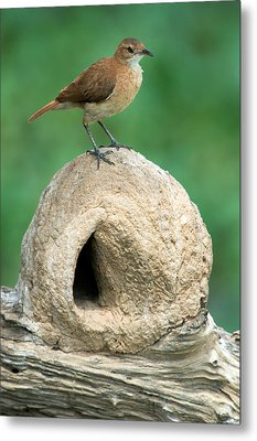 Rufous Hornero Furnarius Rufus On Nest Metal Print by Panoramic Images