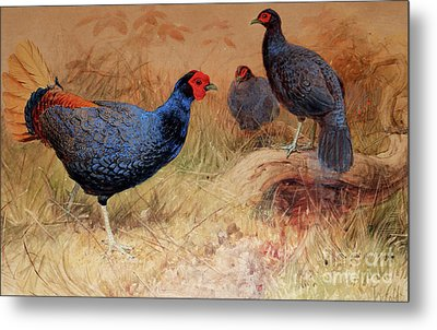 Rufous Tailed Crested Pheasant Metal Print by Joseph Wolf