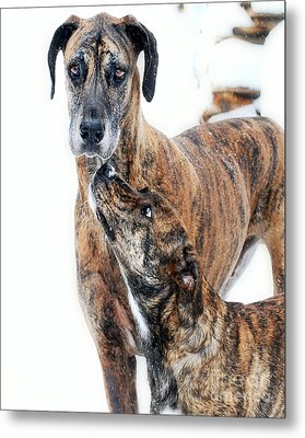 Metal Print featuring the photograph Rufus And Ava by Lila Fisher-Wenzel