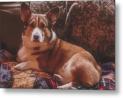 Rukky's Winter Pose 2016 Metal Print by Mick Anderson