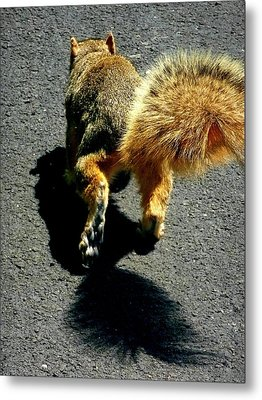 Runaway Fox Squirrel Metal Print by Beth Akerman