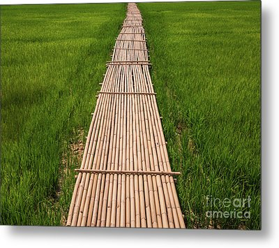 Metal Print featuring the photograph Rural Green Rice Fields And Bamboo Bridge. by Tosporn Preede