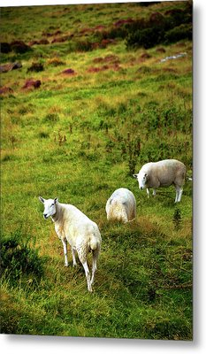 Metal Print featuring the photograph Rural Idyll. Wicklow. Ireland by Jenny Rainbow