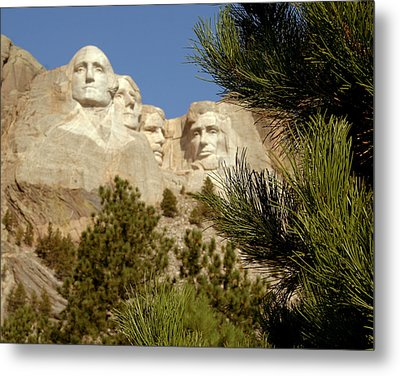 Rushmore Pine Needles Metal Print by Mike Oistad