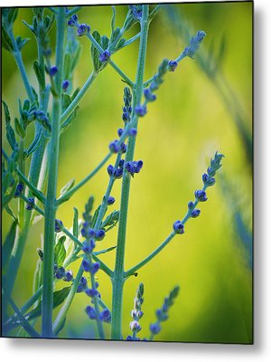 Metal Print featuring the photograph Russian Sage by Douglas MooreZart