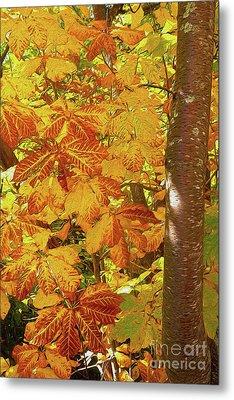 Rusty Autumn Fall Color Leaves In The Blue Ridge Ap Metal Print by Dan Carmichael