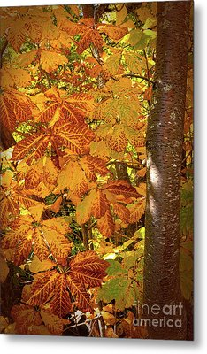 Rusty Autumn Fall Color Leaves In The Blue Ridge Metal Print by Dan Carmichael