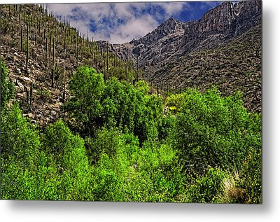 Metal Print featuring the photograph Sabino Canyon H33 by Mark Myhaver