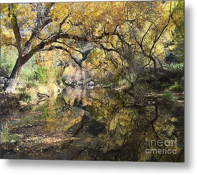 Sabino Canyon In Fall Metal Print