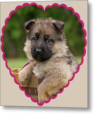 Metal Print featuring the photograph Sable Puppy In Heart by Sandy Keeton
