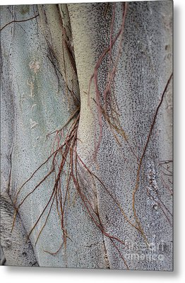 Sacred Bodhi Tree Detail With Red Creeper Vines Metal Print by Jason Rosette