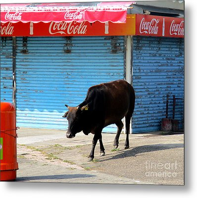 Metal Print featuring the photograph Sacred Cow 1 by Randall Weidner