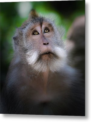 Sacred Monkey Forest Sanctuary Metal Print
