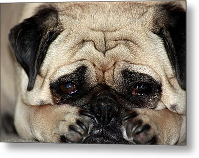 Sad Dog Metal Print by Michael Albright