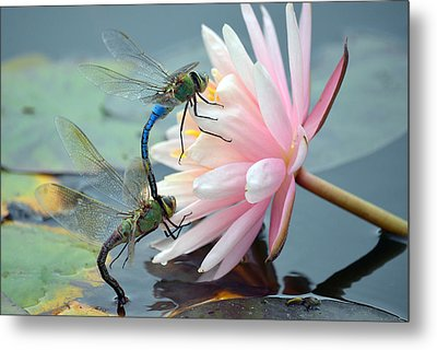 Safe Place To Land Metal Print by Fraida Gutovich