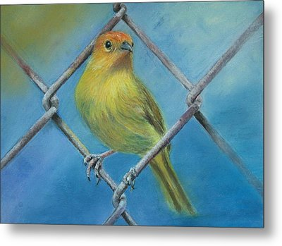 Metal Print featuring the painting Safron Finch by Ceci Watson