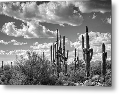 Metal Print featuring the photograph Saguaro And Blue Skies Ahead In Black And White  by Saija Lehtonen