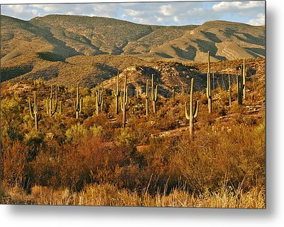 Saguaro Cactus - A Very Unusual Looking Tree Of The Desert Metal Print by Christine Till