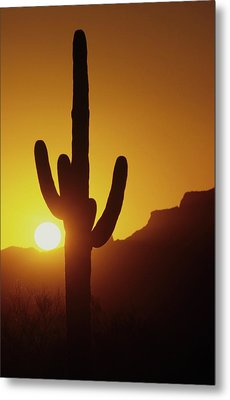 Saguaro Cactus And Sunset Metal Print by Don Kreuter