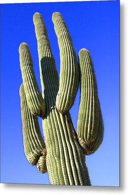 Saguaro Cactus - Arizona Metal Print by Mike McGlothlen