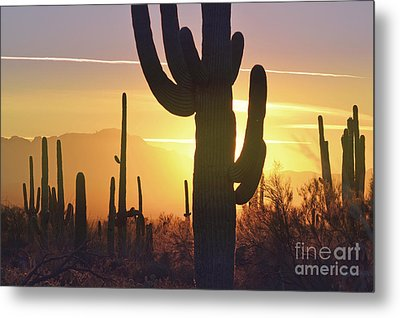 Saguaro Cactus Golden Sunset Mountain Metal Print by Andrea Hazel Ihlefeld