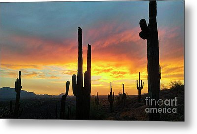 Metal Print featuring the photograph Saguaro Sunset by Anthony Citro