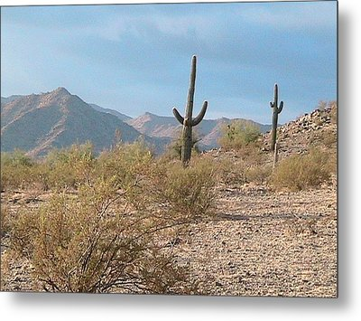 Saguaros On A Hillside Metal Print