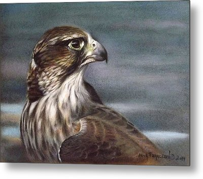 Saker Falcon Metal Print by Anna Franceova